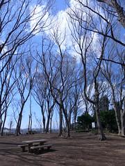 19o1625 (kimagurenote) Tags: tree 東高根森林公園 higashitakane forest park 川崎市宮前区 miyamaekawasaki