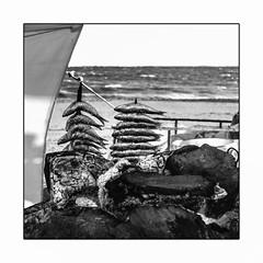 Bien terminer l'année (francis_bellin) Tags: 2018 feux espagne sardines cabanedeplage espetodesardinas mer merméditerranée noiretblanc monochrome brochettes blackandwhite grillade soleil décembre plage bw andalousie torredelmar chiringuito