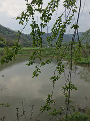Village Fishing Pond (cowyeow) Tags: farm farmland travel hunan nature china composition chinese asia asian landscape rural mountain mountains green pond lake fishing tree trees water fish