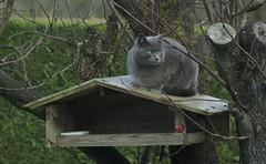 _le chat (joëlroselier) Tags: chat mammifère arbre
