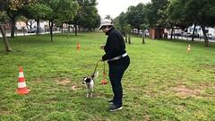 IMG_8529 (Doggy Puppins) Tags: educación canina adiestramiento canino perro dog