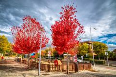 RED LEAVES TREES ON AUTUMN (poseinformal) Tags: 2018 autumn hdr madrid nikon24120mmf4gedafsv nikond750 pozuelodealarcon spain pozuelodealarcón españa es nikon24120mmf4gedafsvr