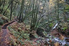 Visit to Bridal Veil Falls State Scenic Viewpoint (Bridal Veil, Oregon) - November 1st, 2018 (cseeman) Tags: bridalveilfallsstatescenicviewpoint columbiarivergorge columbiarivergorgewaterfalls waterfallsoforegon waterfallsofportland oregonstateparks parks waterfalls stateparks trees portland2018 pacificnorthwest oregonparks bridalveilfalls bridalveil oregon water overcast wet autumn historiccolumbiariverhighway columbiariver columbiariverhighway trails bridalveiltrails bridalveilfallstrails