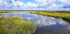Assateague scenery by jay yang (Maryland DNR) Tags: 2018 photocontest wildlife mammals ponies horses assateague marsh