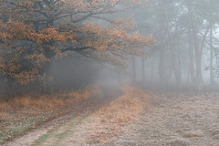 Autumn Mood (Pieter ( PPoot )) Tags: autumn mist mood forest color brown path
