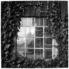 Window (Mattias Lindgren) Tags: autumn sverige medium format 6x6 sweden pentacon six tl film iso 100 mf f28 120film scan fomapan 80mm bw höst foma analog mc biometar 2880 carl zeiss jena mcbiometar2880carlzeissjena foma100 fomapan100 iso100 mediumformat pentaconsixtl 2018recap