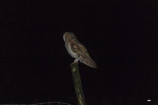Burning the midnight owl