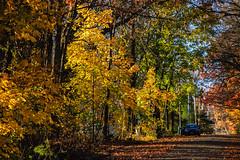 Our Street_4602 (smack53) Tags: smack53 fall fallseason fallcolors foliage autumn autumnseason autumncolors westmilford newjersey nikon d100 nikond100 trees autumnal