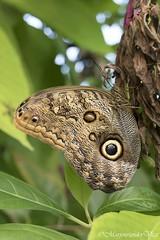 Vlindertuin (Marjon van der Vegt) Tags: diergaardeblijdorp rotterdam dieren vlinders tijgers giraffen ijsberen vogels