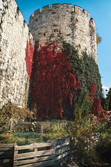 Yedikule, Istanbul (sdhaddow) Tags: istanbul turkey ottoman castle tower vines autumn