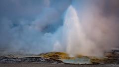 Twig Geyser (Bruce Bugbee) Tags: yellowstonenationalpark wyoming unitedstates us twiggeyser geyser morning sunrise steam water geothermal nikon d7200 eruption