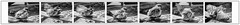 Accouplement (Pyc Assaut) Tags: accouplement moineau oiseau oiseaux bird noir blanc black white blackwhite pyc5pyc pyc5pycphotography p pierreyvescugni pycassaut suite animus animal printemps extérieur nature naturel natural vie instint reproduction couple position ailes monter cestlprintemps ébatsamoureux ébats amoureux plaisir sensualité sensuel sens suitesensuel sensuelle suitesensuelle