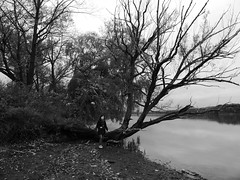 Tree B&W (WabbitWanderer) Tags: cootesparadise cootes conservation wilderness hamilton ontario tree