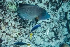 Palau 帛琉