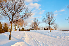 Voiepoly.Hiver.veloQc (Grands parcs Montréal) Tags: sentier parcfrédéricback neige saintmichel 2016