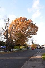 DSC_2245 (PeaTJay) Tags: nikond750 reading lowerearley berkshire gardens outdoors flora fauna plants flowers trees bushes