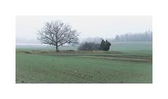 LS III (*TimeBeacon*) Tags: landscape tree fog mist field