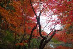 PC013704 (kunmorita) Tags: 白馬渓 臼杵市 臼杵 usuki