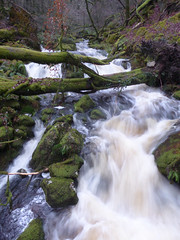 Fast flowing (ExeDave) Tags: p11700467 river yealm dendles wood national naturereserve nnr nr cornwood dartmoor devon sw england gb uk watercourse inspate woodland landscape park np sssi november 2018