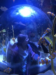"2018-03-24-to-30-minnesotta-to-see-adam-and-sara-curl-with-family-at-aquarium-6_44036499175_o • <a style=""font-size:0.8em;"" href=""http://www.flickr.com/photos/109120354@N07/45494720584/"" target=""_blank"">View on Flickr</a>"