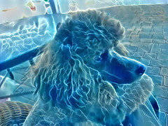 An Electrified Poodle (Eclectic Jack) Tags: generator dream deep ddg process processing post art artistic modified altered processed blue poodle toy dog
