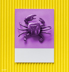 Little cute crab on a paper (Rawpixel Ltd) Tags: abstract background card colorful concept crab creative cute decoration figure fun joy little mini miniature model name paper pattern play purple seafood shape small symbol textured tiny toy yellow