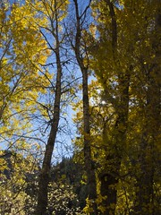 Fall Palette (trainmann1) Tags: nikon d7200 amateur outside exterior outdoors fall 2018 vacation trip scenic beautiful co colorado west midwest trees colorful yellow gold brown sky blue sun handheld