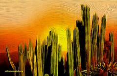 SUNSET AND CACTUS (Viktor Manuel 990.) Tags: sunset cactus ocaso sky cielo digitalpainting pinturadigital textures texturas querétaro méxico victormanuelgómezg sun sol