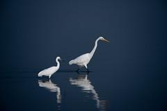 HoskoteBirding_Jan2019_D75_8351 (mgcs) Tags: hoskote birds indianbirds karnataka nikond750 nikkor200500 wild handheld