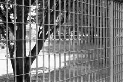 Como, Via Palestro, 2018 (sirio174 (anche su Lomography)) Tags: como parcogiochi parchigiochi playground playgrounds spaziogiochi viapalestro italia italy canonae1 ilfordfp4
