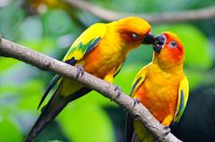 beautiful-love-birds-wallpapers31 (lisa_pria221) Tags: bird birds beauty birdlovers beautiful animals santa animalslovers christmas christmas18 christmas2018 christmasiscoming