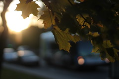 Down the street... (MomOfJasAndTam) Tags: road street tree leaf leaves light lighting backlighting car cars bus park sunlight sun