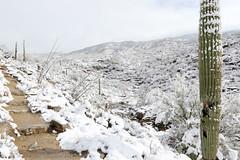 Desert snowscape (sparverius81) Tags: landscape paisaje paisajem snowscape saguaro cactus saguaronationalpark publiclands winterwonderland nieve snow nevada hiking mountains montañas snowcovered snowfall