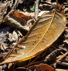 Vessel (LooknFeel) Tags: takenwithiphone iphone6 20181118 • leaf leaves autumn fall water img0848c