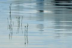 DSCN0609f (haberwolf) Tags: wasser water reflection