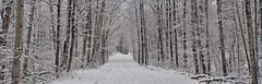 We got frosted (Steve InMichigan) Tags: road backroad ruralroad statelandroad snowyroad woods snowywoods winteryscene panoramic vivitarwideangle28mmf25kinokironlens fotasyfdfleosmlensadapter canoneosmcamera