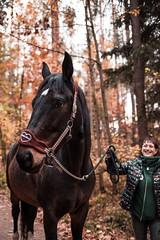 horse (simonwzr) Tags: bamberg bayern landscape street photography hike hiking giechburg