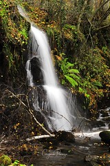 Fervenza en Busmayor (grepin11) Tags: cascada fervenza leon galicia agua rio river water cascads hayedo busmayor bosque