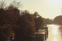 Autumn lights (Chapo78) Tags: autumn lights trees river water sunset cold paris