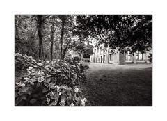 Si son nez avait été plus long... (Scubaba) Tags: europe france pasdecalais noirblanc noiretblanc blackwhite bw monochrome fleurs flowersmaison house bois wood arbres trees typhonium