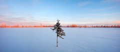 Winter (czdistagon.com) Tags: winter snow landscape frozen fir tundra beautiful frost new year dawn white season wilderness hoarfrost tree cold nature outdoor hoar spruce wood background snowy snowfall holiday vacation hill wonderland travel ice cloud panorama scene cover nobody panoramic view powder shadow scenic trip weather silence breathtaking tourism russia