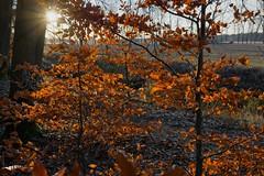 Am Gundbach (nordelch61) Tags: deutschland hessen heimat naturschutzgebiet mönchbruch gundbach gundbachwiesen gundbachweiher mörfeldenwalldorf winter sonne bäume zweige blätter wasser himmel nachmittag licht