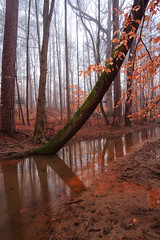 Winter optimism (Loizos81) Tags: winter trees forest river landscape mist fog waterscape reflections autumn