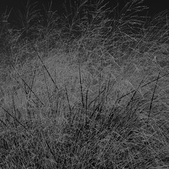 TERRA INCOGNITA (Grant Simon Rogers) Tags: grantsimonrogers ƒ fecit artist photographer lecturer terraincognita leica leicaq leicasf40flash leicacamera hichabitatfelicitas botanischergartenundbotanischesmuseumberlin berlin deutschland de europe blackwhite bw wb photopsychotherapy keepsmehappy jungheart learning thinking making thefirst10000 susurration windinthegrass susurrus themeditationsofgrantiusmaximus trousers trousersrolled grassswimmer itiswhatitis citizenoftheworld themanwhoflashedinthegrass flickr instagram facebook twitter linkedin ahumanlikeyou weallneedahug