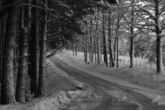 Snowy Roadways (steve_whitmarsh) Tags: aberdeenshire scotland scottishhighlands highlands winter snow trees forest road blackandwhite bw monochrome topic cairngorms