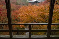 Tofuku-ji,Higashiyamaku,Kyoto (yopparainokobito) Tags: tofukuji 東福寺 とうふくじ 京都 kyoto autumnleaves autumncolors 紅葉 canon eosm3 eos m3 efm1122mm1456isstm efm 1122mm f456 is stm