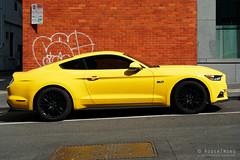 20190202-01-Mustang (Roger T Wong) Tags: 2019 australia melbourne rogertwong sel24105g sony24105 sonya7iii sonyalpha7iii sonyfe24105mmf4goss sonyilce7m3 victoria car mustang summer yellow