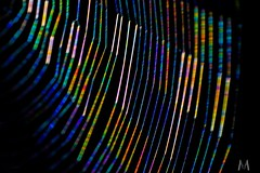 A web rainbow (SuzieAndJim) Tags: light refraction spectrum colours colors web rainbow suzieandjim