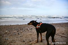 20190101 DIETRICHSHAGEN (15).jpg (Marco Förster) Tags: wolken natur ostsee winter jahreszeiten strand