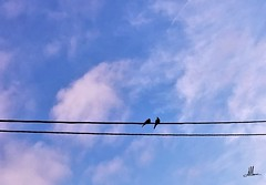FOTOROMANZA (giovanni.muscara28) Tags: fotografia photography landscape cloud nuvole skye art arte cool good strong love amore clouds blue adorable carpediem look color romance